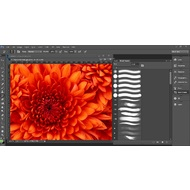 Brush presets in Adobe Photoshop CC