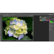 Color and Histogram in Adobe Photoshop CC